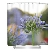 Agapanthus Africanus - Lily Of The Nile Shower Curtain