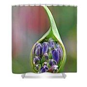 Agapanthus Bud Shower Curtain