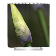Agapanthus Bud Delight  Shower Curtain