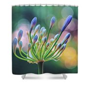Agapanthus Dawn Shower Curtain