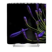 Agapanthus In The Shadows Shower Curtain