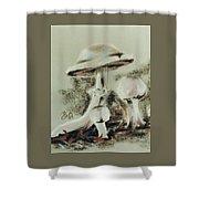 Agaricus Micromyathus Shower Curtain by Barbara Keith