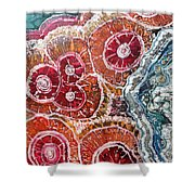 Agate Inspiration - 16a Shower Curtain