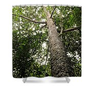 Agathis Borneensis Tree Shower Curtain