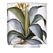 Agave, 1613 Shower Curtain