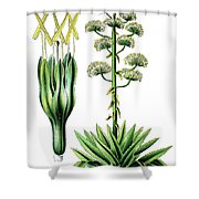 Agave Americana, Common Names Century Plant, Maguey Or American  Shower Curtain