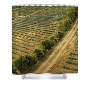 Agave Fields Shower Curtain