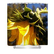 Age Of Beauty Shower Curtain