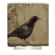 Age Old Crow  Shower Curtain