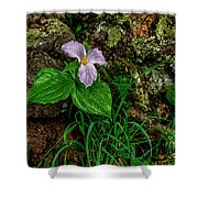 Aged White Trillium With Raindrops Shower Curtain