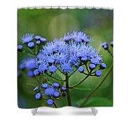 Ageratum Blue Shower Curtain