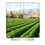 Agriculture In The Desert Shower Curtain