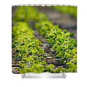 Agriculture- Soybeans 1 Shower Curtain