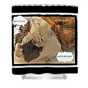 Ahh Guinea Pig Greetings Shower Curtain