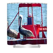 Ahoy Pelicans Shower Curtain