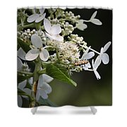 Ailanthus Webworm Moth 1 Shower Curtain