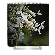 Ailanthus Webworm Moth 2 Shower Curtain