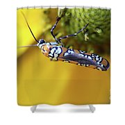 Ailanthus Webworm Moth Shower Curtain