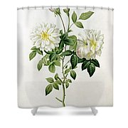 Aime Vibere Shower Curtain by Pierre Joseph Redoute