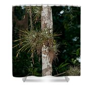 Air Plants In Grupo Coba At The Coba Ruins  Shower Curtain