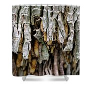 Air Roots Shower Curtain