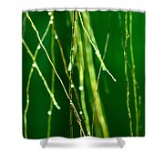Air Roots Orchid Shower Curtain