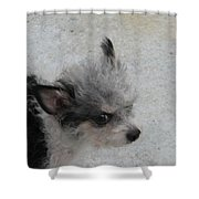 Airport Pup Shower Curtain