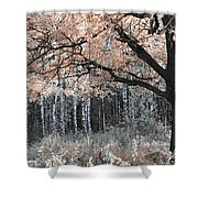 Airy Autumn In Woods Shower Curtain