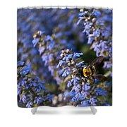 Ajuga And Bumblebee Shower Curtain