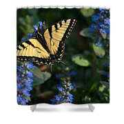 Ajuga With Tiger Butterfly Shower Curtain