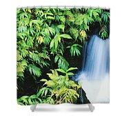 Akaka Falls State Park Shower Curtain