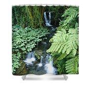 Akaka Falls Stream Shower Curtain