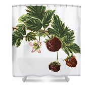 Akala Berries Shower Curtain
