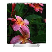 Akeakamai Pua Melia Tropical Plumeria Shower Curtain