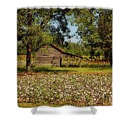 Alabama Cotton Field Shower Curtain