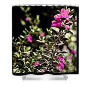 Alamo Blooms Shower Curtain