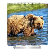 Alaska Bear Shower Curtain