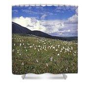 Alaska Cotton Eriophorum Scheuchzeri Shower Curtain