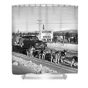 Alaska: Dog Sled, C1950 Shower Curtain
