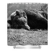Alaska Grizzly - Do Not Disturb Grayscale Shower Curtain