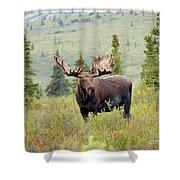 Alaska Monarch #3 Shower Curtain