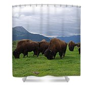 Alaska Wood Bison Shower Curtain