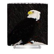 Alaskan Bald Eagle Shower Curtain