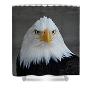 Bald Eagle Ketchikan Alaska Shower Curtain