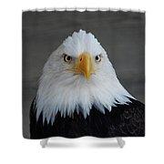 Bald Eagle Ketchikan Alaska Shower Curtain