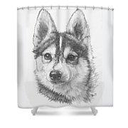 Alaskan Klee Kai Shower Curtain
