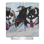 Alaskan Malamute Strong And Steady Shower Curtain