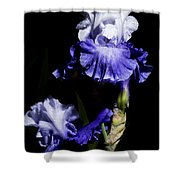 Alaskan Seas Iris  Shower Curtain