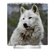 Alawa The Wolf Rests Shower Curtain