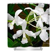 Alba  Orchid Shower Curtain